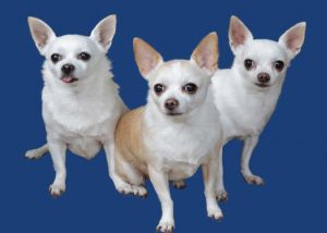 tripletsgal.jpg